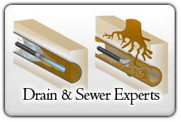 clogged+drain+root+intrusion